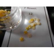 f flowers 12