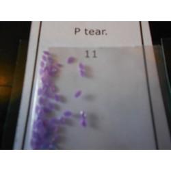 Tear P 11