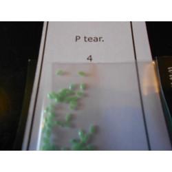 Tear P 4