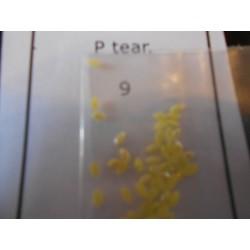 Tear P 9